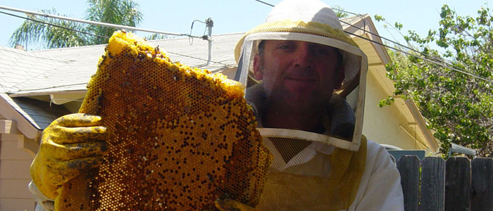 Gardena Bee Removal Guys Tech Michael